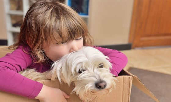Tips for moving with pets - BigSteelBox
